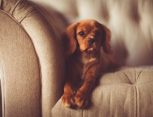 Pets on Property: How Multifamily Managers Can Keep Track